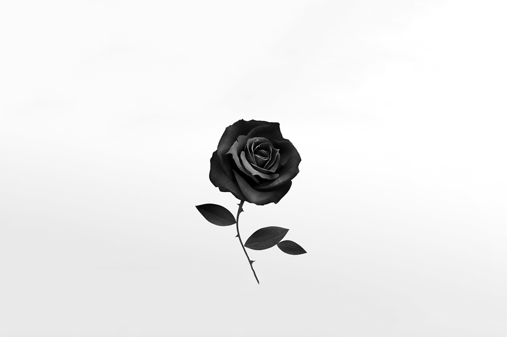 blackrose_new2